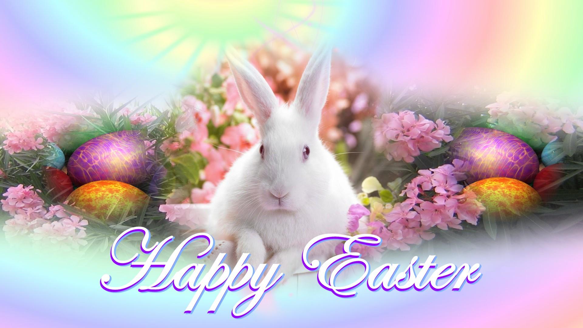 bunny 2016 easter 4k - photo #12